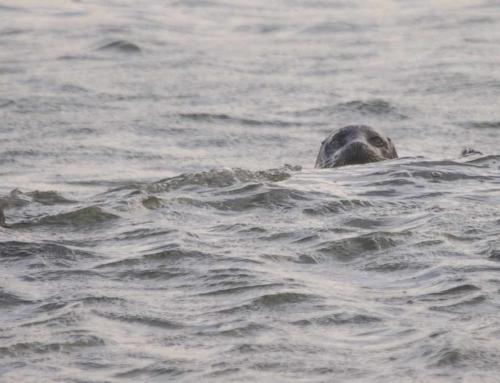 Amazing Animals and Birds to be Seen around Portsoy and the Moray Coast